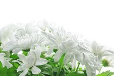 Free White Chrysanthemum Royalty Free Stock Photos - 17816398