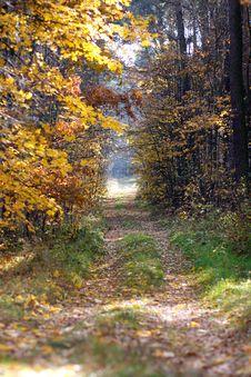 Free Nature Trail Stock Photo - 17816750