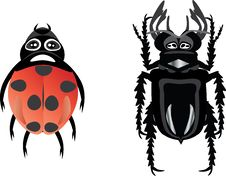 Free Beetles Royalty Free Stock Photos - 17818178