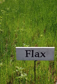 Free Field Of Flax Stock Photos - 17818393
