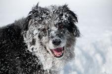 Free Dog Profile Royalty Free Stock Photos - 17818758