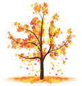Free Autumn Tree Royalty Free Stock Photography - 17822837