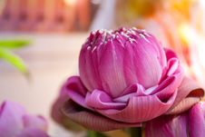Free Folded Into Lotus Petals. Royalty Free Stock Photography - 17821647