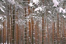 Free Winter Landscape Stock Photo - 17821650