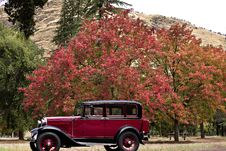 Free Model A In Front Of A Red Tree Stock Image - 17821831