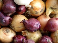Free Onions Royalty Free Stock Images - 17823499