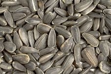 Free Close Up Sunflower Seeds Royalty Free Stock Image - 17823996