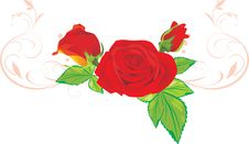 Free Three Red Roses With Ornament Stock Photography - 17827062