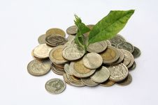 Free Plant In Coins Royalty Free Stock Photography - 17827547