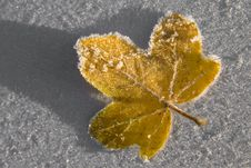 Free Frosty Leaf Macro Stock Images - 17828634