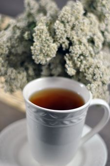Free Yarrow Tea Royalty Free Stock Image - 17828686