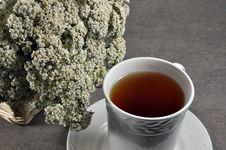 Free Yarrow Tea Stock Image - 17828691