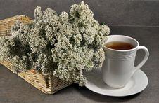Free Yarrow Tea Stock Photos - 17828693