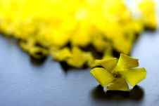 Free Yellow Petals Stock Photography - 17829222