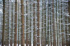 Free Cold Boles Royalty Free Stock Photos - 17829298