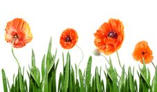 Free Poppies Stock Photography - 17829482