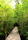 Free Mangrove Forest Stock Images - 17836584