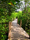 Free Mangrove Forest Stock Image - 17837141
