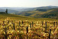 Tuscan Vineyards Stock Photo