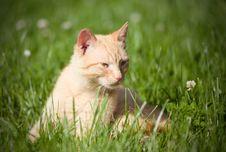 Free Cat Stock Photo - 17831490