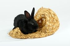 Free Rabbit Sitting In A Straw Hat Royalty Free Stock Photo - 17832035