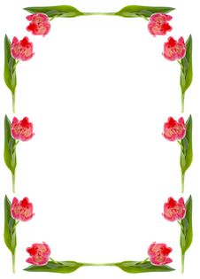 Free Frame Of The Flowers Of Tulip Stock Photography - 17834152