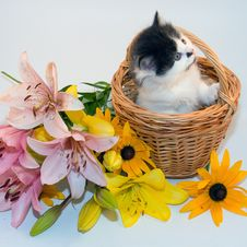 Free Little Kitten In A Basket And Flowers Stock Image - 17834361