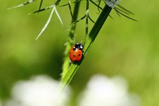 Lady Beetle Stock Photo