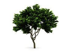 Free Tree. Stock Photo - 17836430