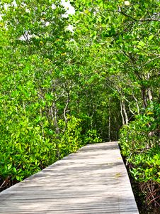 Free Mangrove Forest Royalty Free Stock Photos - 17836478