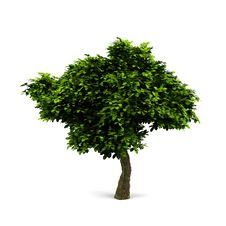 Free Tree. Stock Image - 17836531