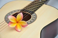 Free Tropical Melody Royalty Free Stock Photos - 17836578