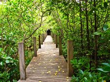 Free Mangrove Forest Stock Images - 17836704