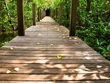 Free Mangrove Forest Royalty Free Stock Photo - 17836765