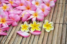 Free Tropical Plumeria In The Spa Stock Photography - 17836782