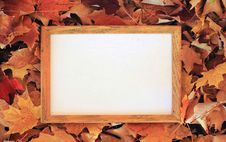 Free Wooden Frame On The Leaves Royalty Free Stock Photo - 17837415