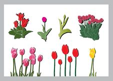 Tulips Silhouettes Set Royalty Free Stock Photos