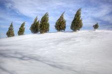 Free Evergreens On Snowy Hill Royalty Free Stock Photography - 17839067