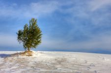 Free Evergreen In Snow Royalty Free Stock Images - 17839089