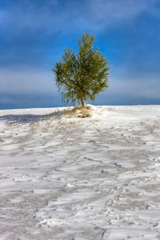 Free Evergreen On Snowy Hill Stock Images - 17839094