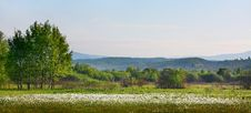 Free Narcissus Field Stock Photos - 17839103