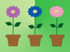 Free Three Colorful Flowers In Pots Royalty Free Stock Images - 17839819