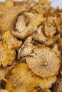 Free Mushrooms Royalty Free Stock Image - 17843786