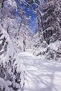 Free Winter Path Stock Image - 17844821