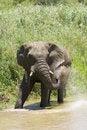 Free Elephant Spray Royalty Free Stock Photo - 17846145