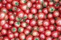 Free Tomatoes Royalty Free Stock Photo - 17847815