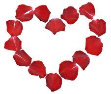 Petals Of Roses Stock Image