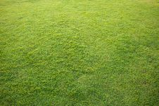 Free Nature Green Grass Royalty Free Stock Photo - 17840785