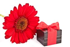 Gift Box And A Red Flower Stock Photos