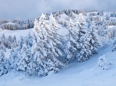 Free Winter In The Alps Royalty Free Stock Photo - 17842105